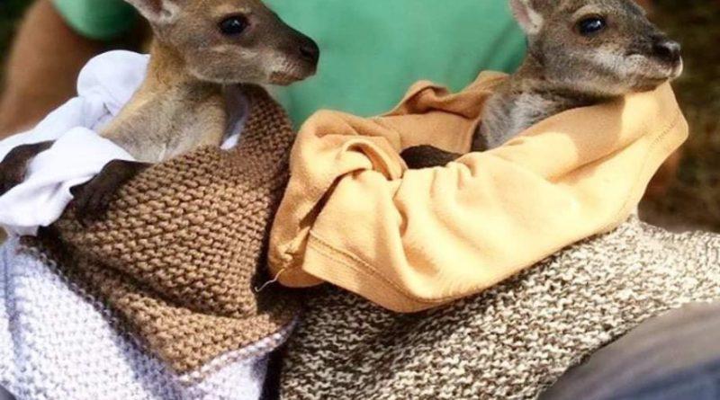Atelier couture le 30 janvier : Poches pour les animaux en Australie